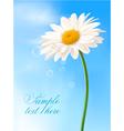 beautiful white daisy vector image vector image