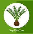 sago palm tree of exotic tropical vector image vector image