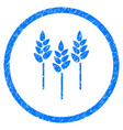 wheat ears rounded grainy icon vector image vector image