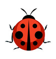 cute ladybug icon vector image
