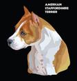 american staffordshire terrier-2 portrait vector image vector image