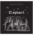 animal world elephant hand drawing image vector image vector image