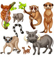 different types of wild animals on white vector image vector image