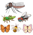 isolated picture different insects vector image