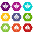 maple leaf icon set color hexahedron vector image vector image
