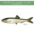Sardine Marine Food Fish vector image vector image