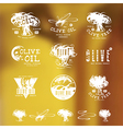 Set of label and badges for olive oil vector image vector image