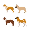 Collection of purebred dogs vector image vector image