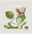 Cotton stages vector image