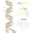 dna infographics vector image vector image