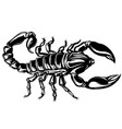 a scorpion on isolated vector image