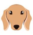 isolated dachshund avatar vector image vector image