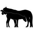 mare and foal black silhouette vector image vector image