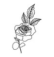 outline nature rose plant with branch leaves vector image vector image