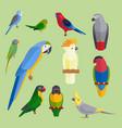 parrots birds breed species animal nature tropical vector image
