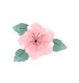 watercolor hibiscus flower in pink vector image vector image