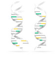 dna double helix realistic structural models vector image