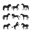 horse pony stallion isolated black silhouette vector image