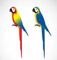 Parrot Macaws vector image vector image
