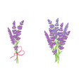 set of two adorable lavender flowers bouquets vector image vector image