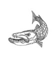 barracuda fish doodle art vector image vector image