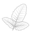 naturalistic autumn leaves on white vector image vector image