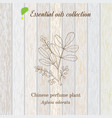 pure essential oil collection chinese perfume vector image vector image