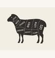 cuts meat lamb butcher shop meat vector image