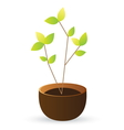 grow tree green leaves on white background vector image