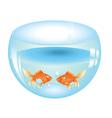 Gold Fish in Aquarium2 vector image