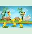 mother duck and ducklings at the river vector image vector image