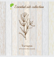 tarragon essential oil label aromatic plant vector image vector image