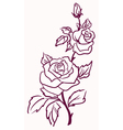 pale roses vector image vector image