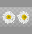 realistic spring chamomile daisy flowers vector image vector image
