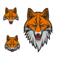 red fox head muzzle sport club mascot logo icon vector image