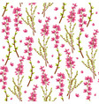 seamless pattern with heather or calluna vulgaris vector image vector image