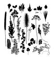 botanical silhouettes vector image