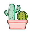 cactus plants exotic in ceramic pot vector image