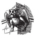 gargoyle used for throwing water vintage engraving vector image vector image