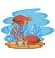 scene with sea turtles swimming in sea vector image