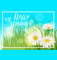 spring daisies chamomiles juicy green lettering vector image vector image