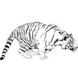 tiger drawn with ink from hands a predator vector image