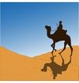 Caravan with camels vector image