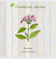 pure essential oil collection bee balm wooden vector image vector image