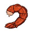 shrimp tail meat design element for poster vector image