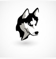 husky isolated on white vector image vector image