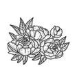 peony flower sketch vector image