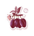 sticker with hand drawn plum branch vector image vector image