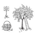 apple tree with a ladder and a basket ripe vector image