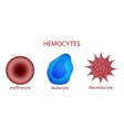 blood corpuscles erythrocyte leukocyte platelet vector image vector image
